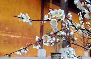 赏梅、 品桃、观落樱……