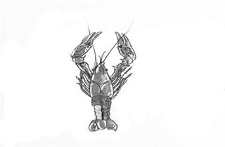小龙虾的头到底能不能吃
