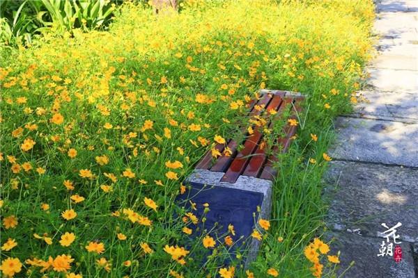 夏秋赏花来西溪,别有一